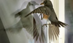 Making glass fly with birds