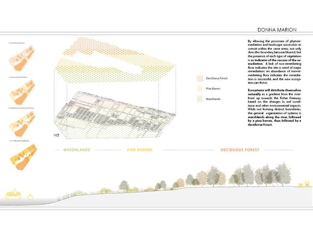 Successional Landscaping - plan and section diagrams
