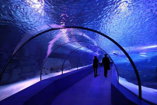 Antalya Aquarium in Antalya, Turkey by Bahadır Kul Architects; Photo: Ket Kolektif