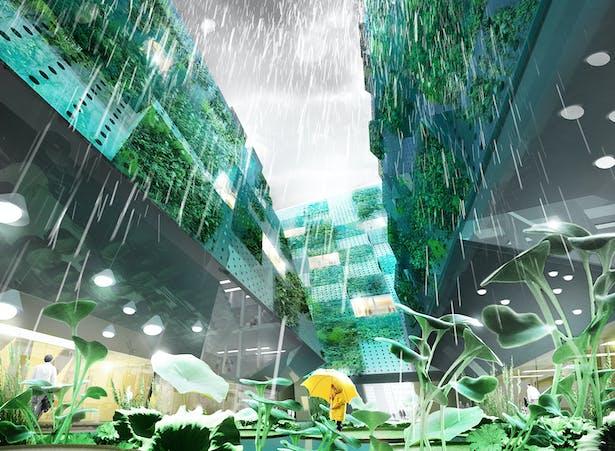 Rain Space