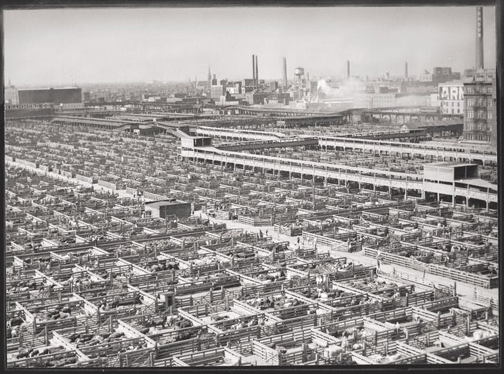 Acres of livestock pens with animals waiting to be slaughtered after being transported from western and southern states. Union Stock Yards, Chicago, Illinois, ca. 1947. US National Archives and Records Administration.