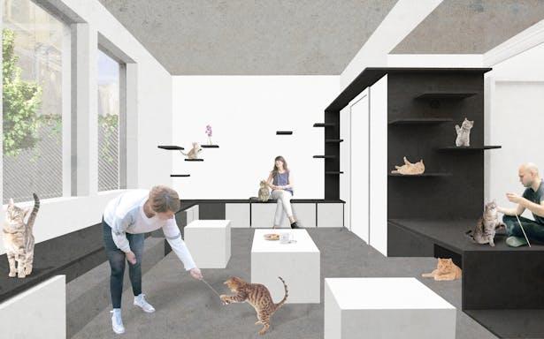 Koneko Upstairs Cattery