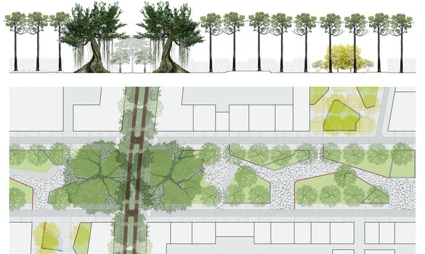 Detail plan and section of Macondo Plaza along Bombacaeae corridor with intersecting Fabaceae plazas and surrounding commercial node