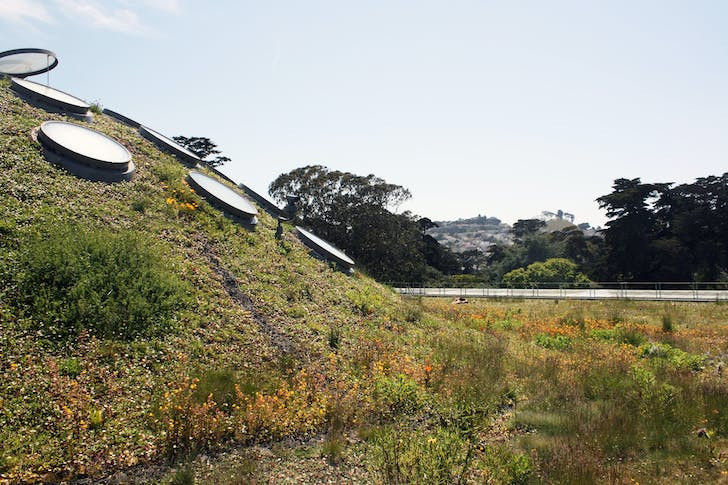 Paul Kephart's green roof of the California Academy of Sciences. Image courtesy of Rana Creek Design.