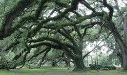 Controversy surrounds plans to replace the golf courses of New Orlean's City Park