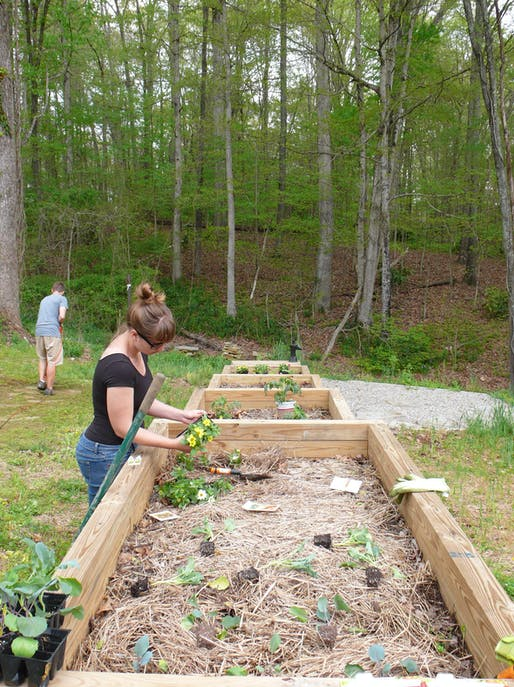 Clearing the community path and separating seedlings