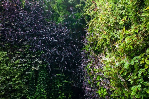 green wall - patio