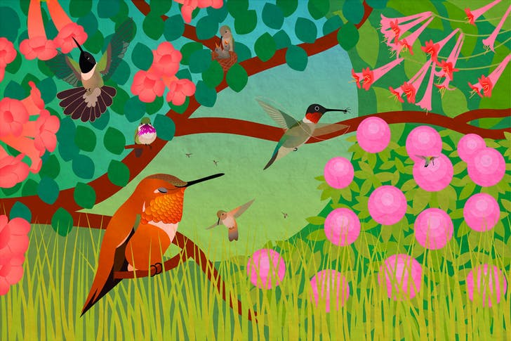 """Life of Hummingbirds. (2011) One of seven bird illustrations for the educational phone app """"Build a Bird"""" by Iridescent and the Cornell Lab of Ornithology. It has also been featured on TV in commercials + shows and several exhibits."""