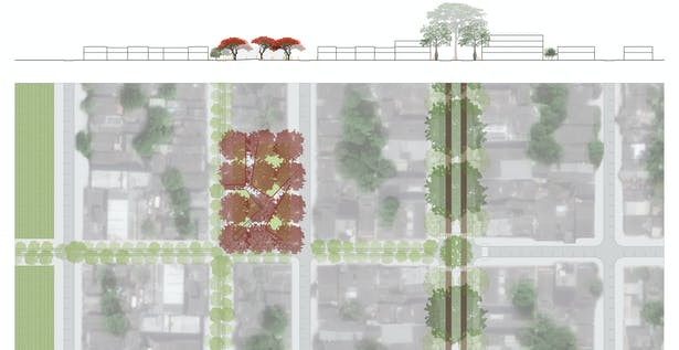 Detail plan and section of Plaza Flamboyan, a pocket plaza that highlights the colorful trees of the Fabaceae family and celebrates the tree as the protagonist instead of any conquistador or individual