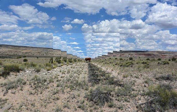 Cattle Portal