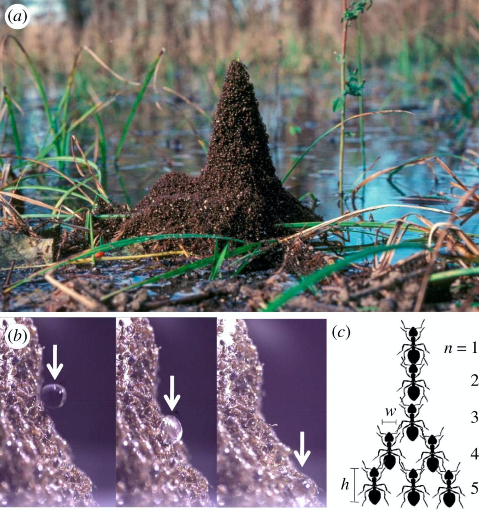 what ants can teach us about the eiffel tower news archinect