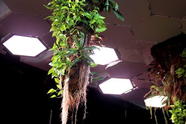 Image: Lighting Science / The Lowline