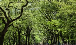 Trees can help megacities save $505 million per year, according to new research