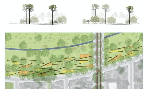 Detail plan and section of Bombacaceae corridor at the intersection of the city and arroyo