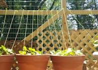 Tectonic Gardening