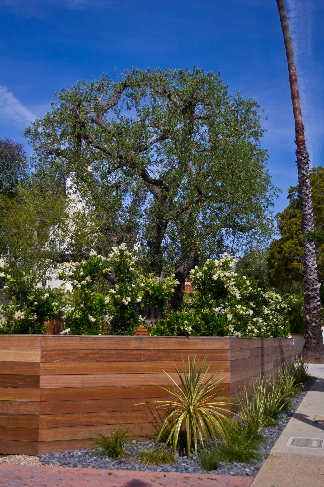 Drought Tolerant Santa Monica Landscape