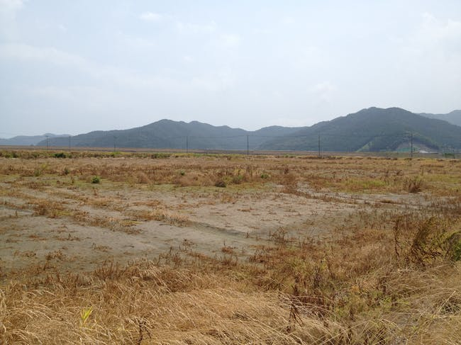 Saline water infested rice field