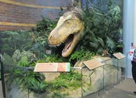 Display of Brian Cooley's Feathered T-Rex Head