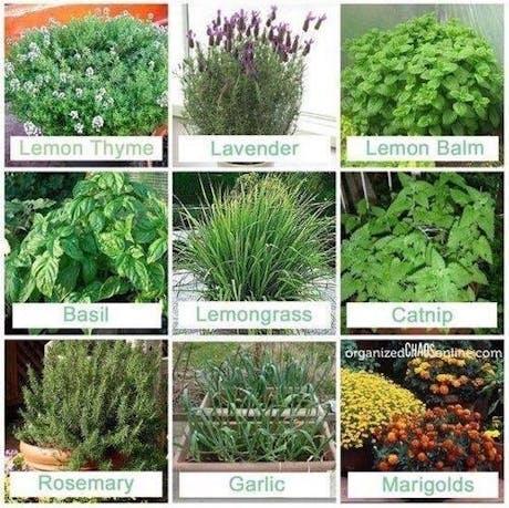 Herb Garden Creation