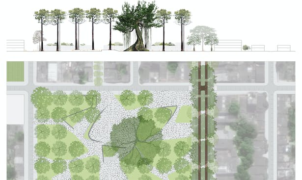 Detail plan and section of larger plaza along the Bombacaceae corridor providing urban relief integrating the intricacies of the individual trees