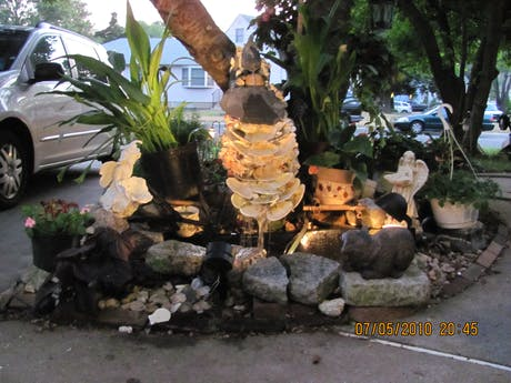 Water Garden and landscaping