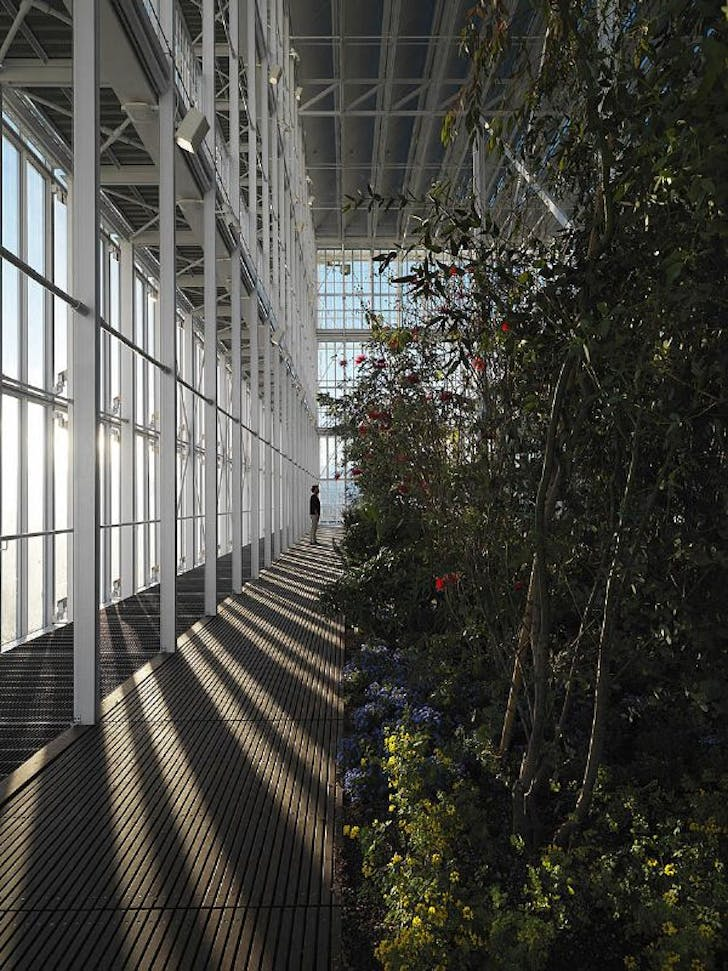 The greenhouse at the top of the Intesa Sanpaolo Skyscraper. Photo: Enrico Cano, via Renzo Piano Building Workshop.