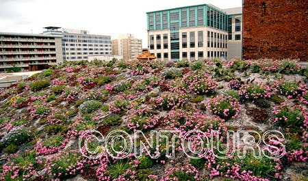 Green roof on the American Society of Landscape Architects's HQ in Washington, D.C.: colorful blooms of Silene caroliniana at the beginning of spring (Image: asla.org)