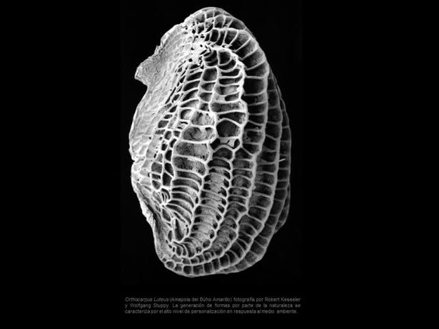 03 - Biological Precedents B
