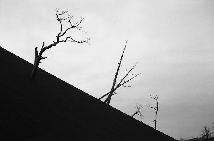 A photo taken in the Kirkenes region by Marijn de Jong suggests the uncanny beauty of industrial landscapes. In 'the Geologic Imagination,' the photograph is captioned: 'Black sand from the smelter with dead trees.' Credit: Marijn de Jong / Sonic Acts