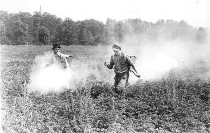 Happy farmers spraying crops with DDT to kill Colorado potato beetles. Credit: WikiCommons