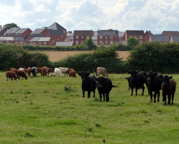 Housing taking over farmland in Leicester, image via geophotos.