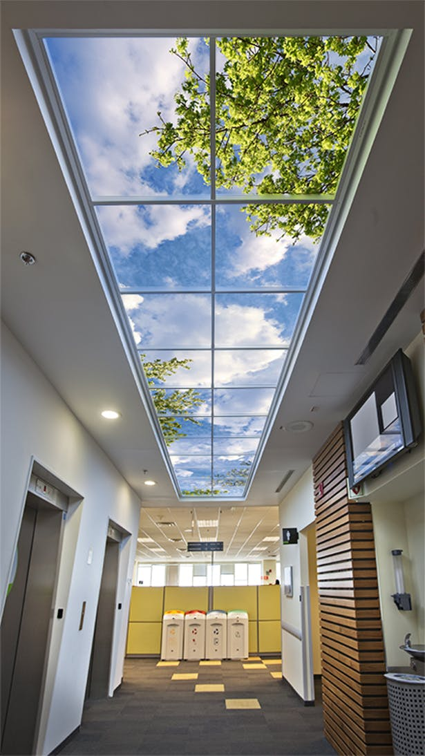 Biophilic illusions of nature provide a perceived spatial opening to open skies.