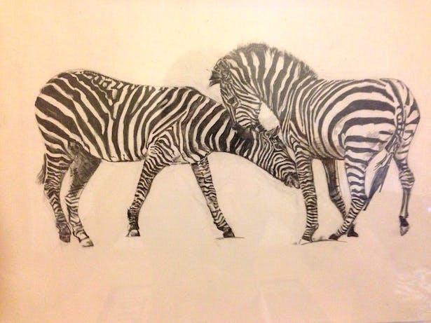 Zebras, 2012