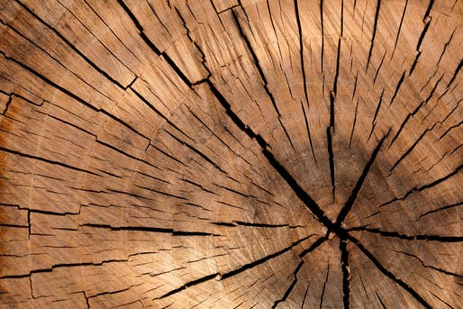 Wood will soon come in far more shapes, sizes, and opacity levels than we're currently familiar with.