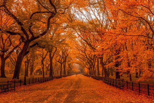 An autumnal Mall in Central Park, November 2015. Photo: Anthony Quintano/Flickr.